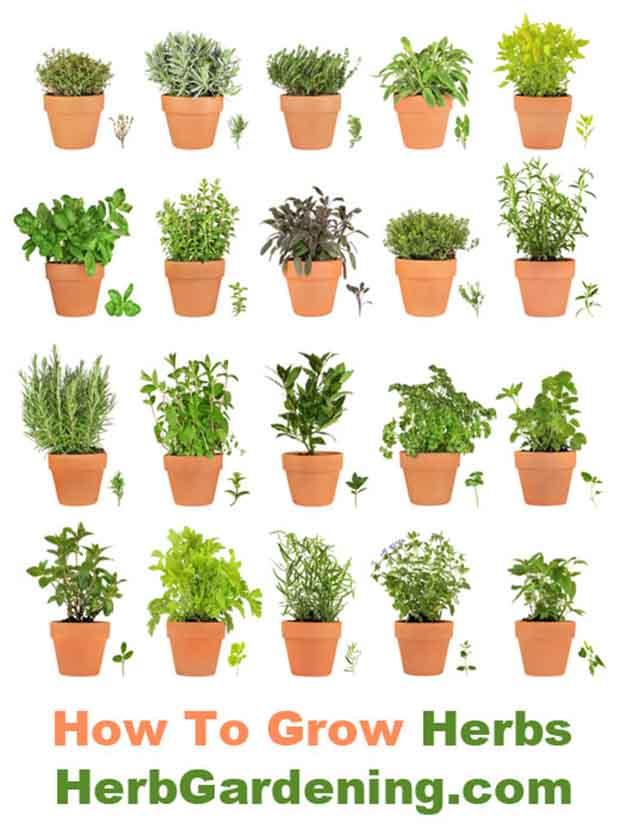 photo credit to herbgardening.com