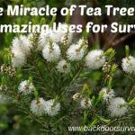 Fact of the day: The Miracle of Tea Tree Oil: 80 Amazing Uses for Survival