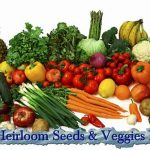 Why Heirloom Seeds & Veggies Matter