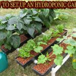 HOW TO SET UP AN HYDROPONIC GARDEN