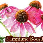 5 Immune Boosting Herbs