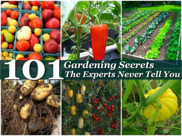 101 gardening secrets the experts never tell you lil moo for Gardening 101 vegetables