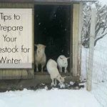 Tips To Prepare Your Livestock For Winter