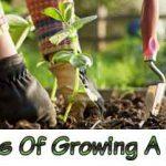 Benefits Of Growing A Garden