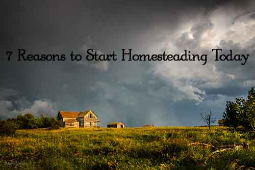 7 reasons to start homesteading today lil moo creations for How to start homesteading today