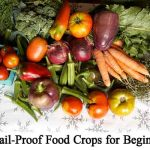 12 Fail-Proof Food Crops for Beginners