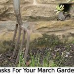 Tasks For Your March Garden!