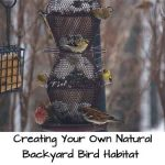 Creating Your Own Natural Backyard Bird Habitat
