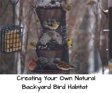 Creating Your Own Natural Backyard Bird Habitat