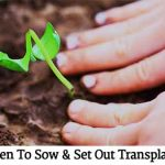 When To Sow & Set Out Transplants