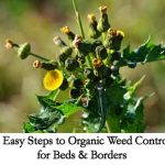 5 Easy Steps to Organic Weed Control for Beds & Borders