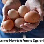 4 Awesome Methods to Preserve Eggs for Later