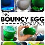 The Bouncy Egg Science Experiment