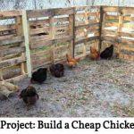 Pallet Project: Build a Cheap Chicken Run