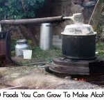 10 Foods You Can Grow To Make Alcohol