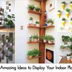 15 Amazing Ideas to Display Your Indoor Plants