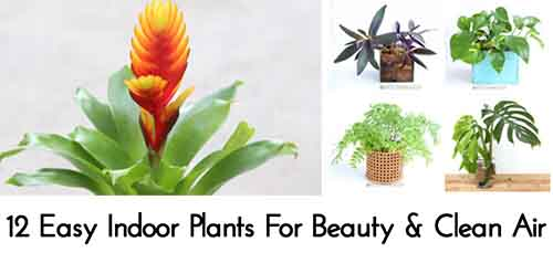 12 Easy Indoor Plants For Beauty & Clean Air - Lil Moo Creations