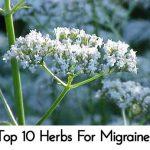 Top 10 Herbs For Migraines