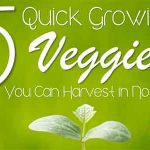 5 Quick Growing Veggies You Can Harvest In No Time