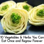 10 Vegetables & Herbs You Can Eat Once and Regrow Forever