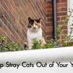 Keep Stray Cats Out of Your Yard
