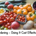Gardening – Doing It Cost Effectively