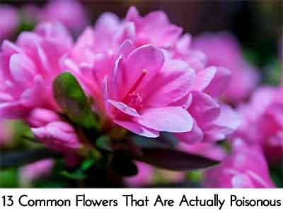 Image credit: balconygardenweb.com