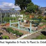 What Vegetables & Fruits To Plant In October