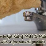 How to Get Rid of Mold & Mildew with a few natural products