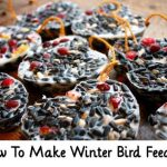 How To Make Winter Bird Feeders