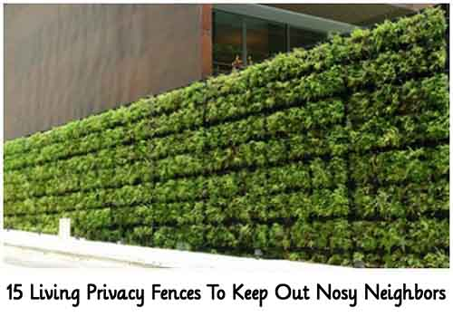 15 Living Privacy Fences To. Keep Out Nosy Neighbors