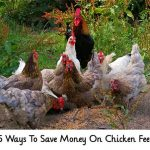 15 Ways To Save Money On Chicken Feed