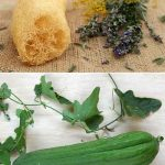 How To Grow Natural Sponge & Eat It Too