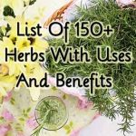 List Of 150+ Herbs With Uses And Benefits