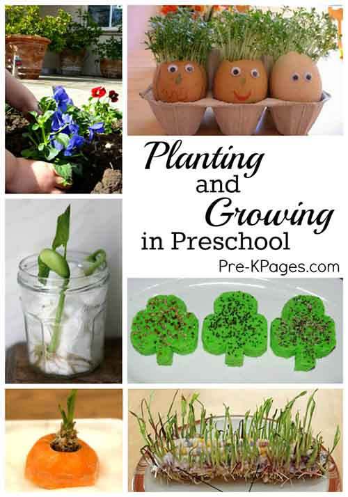 Science for kids planting growing in preschool lil for Indoor gardening lesson