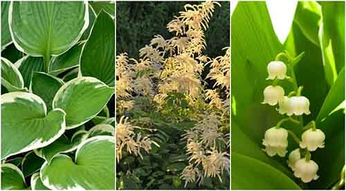 15 beautiful perennials that grow in the shade lil moo for Short trees that grow in shade