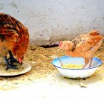 20 Homemade Healthy Treats for Chickens