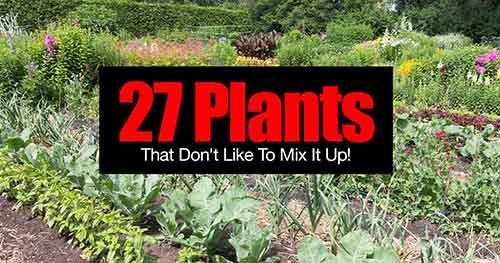 Image: plantcaretoday.com