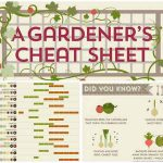 The Ultimate Gardners Cheat Sheet – Spring, Summer And Winter Gardening
