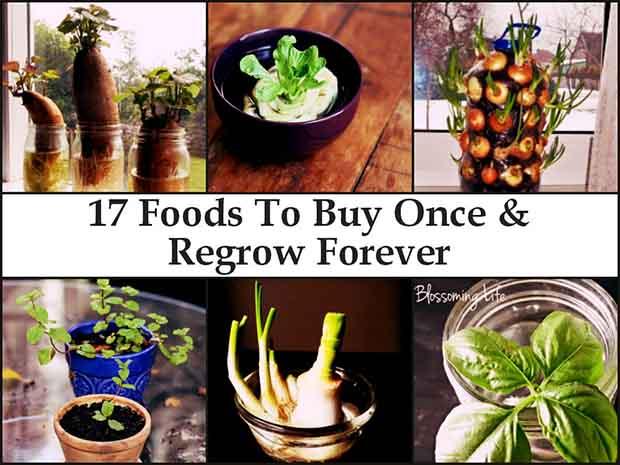photo credit to www.naturallivingideas.com