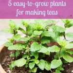 5 Easy-to-Grow Container Plants Perfect for Making Teas