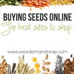 Buying Seeds Online: The Best Sites to shop!