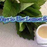 10 Ways to Use Lemon Balm