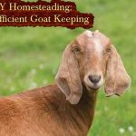 DIY Homesteading: Self-Sufficient Goat Keeping