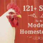 121+ Skills for the Modern Homestead
