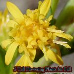 5 Tall Flowering Plants for Fall