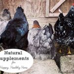 Natural Supplements for Happy Healthy Hens