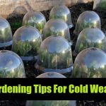 9 Gardening Tips For Cold Weather