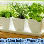 Create a Mini Indoor Winter Garden