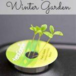Creating a Winter Garden